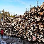 Suomi ja Ruotsi vesittivät Euroopan unionin kestävän rahoituksen kriteerit