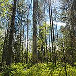 Yhteisymmärrys Vienan reitin metsien käsittelystä saavutettiin