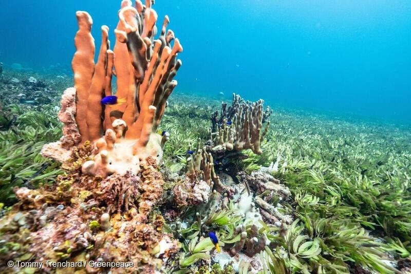 Korallia Intian valtamerellä