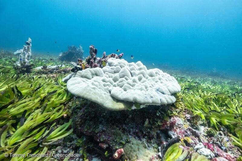 Meriruohoniitty Intian valtamerellä