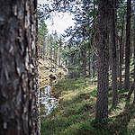 Koskemattomasta luonnonmetsästä avohakkuulle