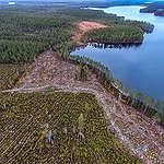 Mitä EU esittää metsiin liittyen? Kysymyksiä ja vastauksia