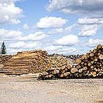 Bioenergian kestävyys ei toteudu hallituksen toiveajattelulla