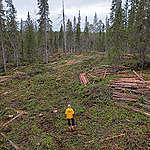 Valtio hakkaa luonnonmetsiä Suomussalmella – Greenpeace paikalla