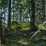 Valtion metsien monimuotoisuus turvattava – tuore raportti esittelee 55 suojelunarvoista metsäkohdetta