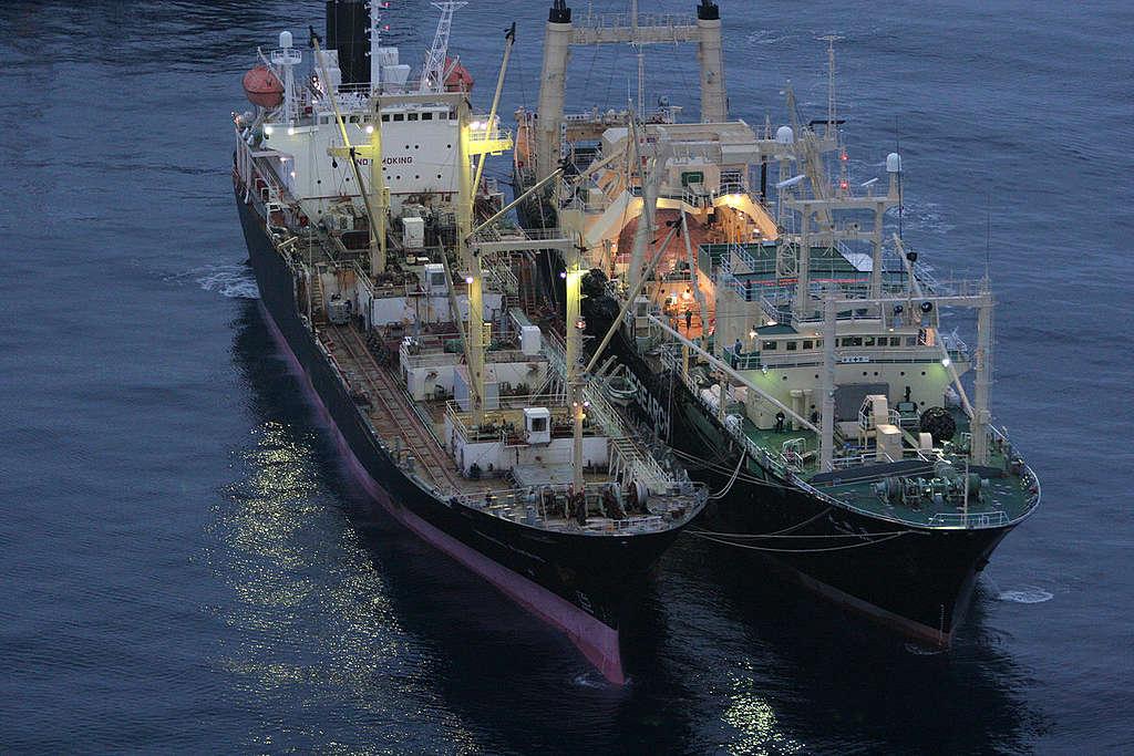 Transhipment of whale meat  - Southern Ocean Tour 2005 - Sutton-Hibbert. © Greenpeace / Jeremy Sutton-Hibbert
