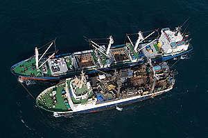 Illegal Transshipment in Guinea Bissau. © Pierre Gleizes / Greenpeace