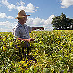 Checking Growth of Soya Plants in Brazil. © Werner Rudhart / Greenpeace