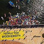 Global Paddle at CBD in Cancun. © Greenpeace