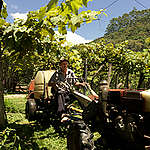 Ecological Farmers in Brazil. © Peter Caton / Greenpeace