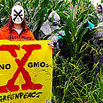 Illegal GE Crops Quarantined in Italy. © Matteo Nobili / Greenpeace