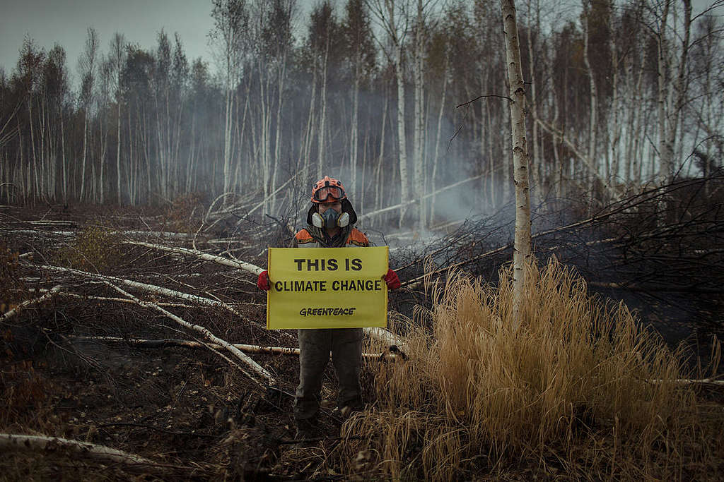 Boreal Wildfire Aftermath in Russia. © Denis  Sinyakov / Greenpeace
