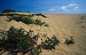 Sand dune, Curonian Spit. © Greenpeace / Vadim Kantor