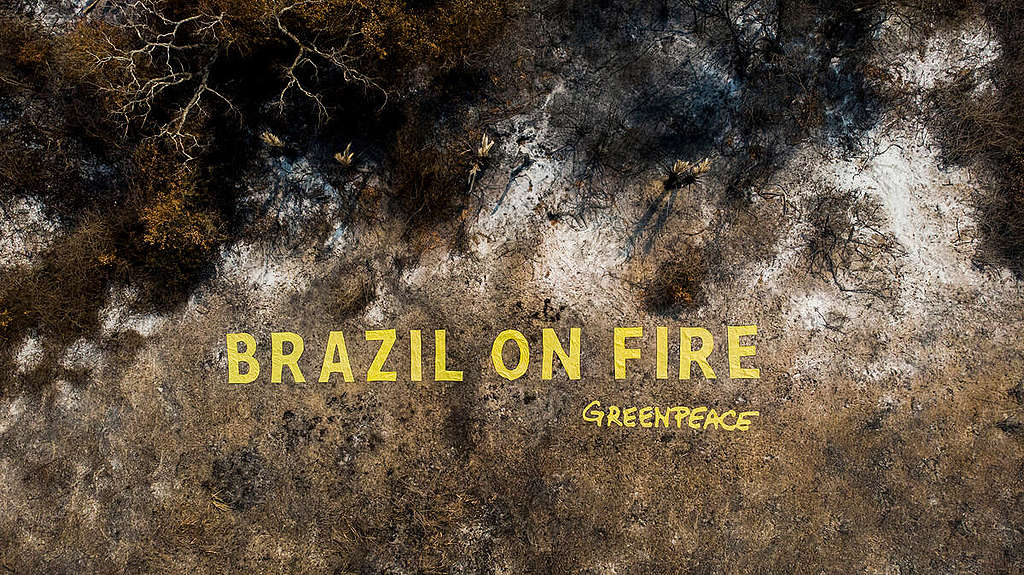 Monument to Destruction in the Pantanal in Brazil. © Leo Otero / Greenpeace