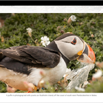 Release v2.41 – New image captions (blue caption removed) | Gallery block in WYSIWYG | New rollback method