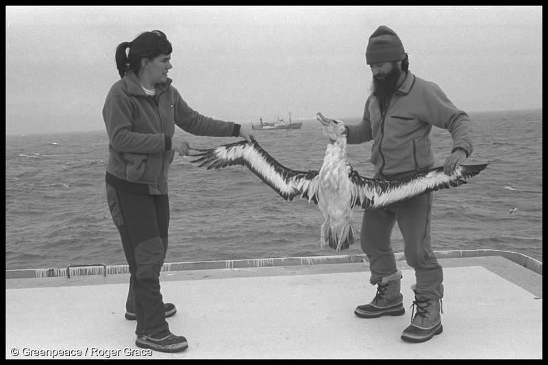 Greenpeace Antarctic expedition leader Janet Dalziell and scientist Ricardo Roura on board MV Gondwana holding a dead albatross that drowned on a longline set by the Soviet longliner MV Kozlovo (in distance) in the Southern Ocean (March 1991)