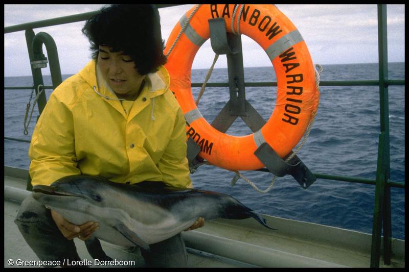 Crew member Naoko Katura on board SV Rainbow Warrior II holding a dead baby dolphin killed by a Japanese driftnet in the Tasman Sea, January 1990.