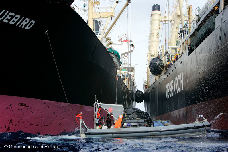 One of MV Esperanza's inflatable boats blocks one of the Japanese Government's whaling fleet vessels from refuelling