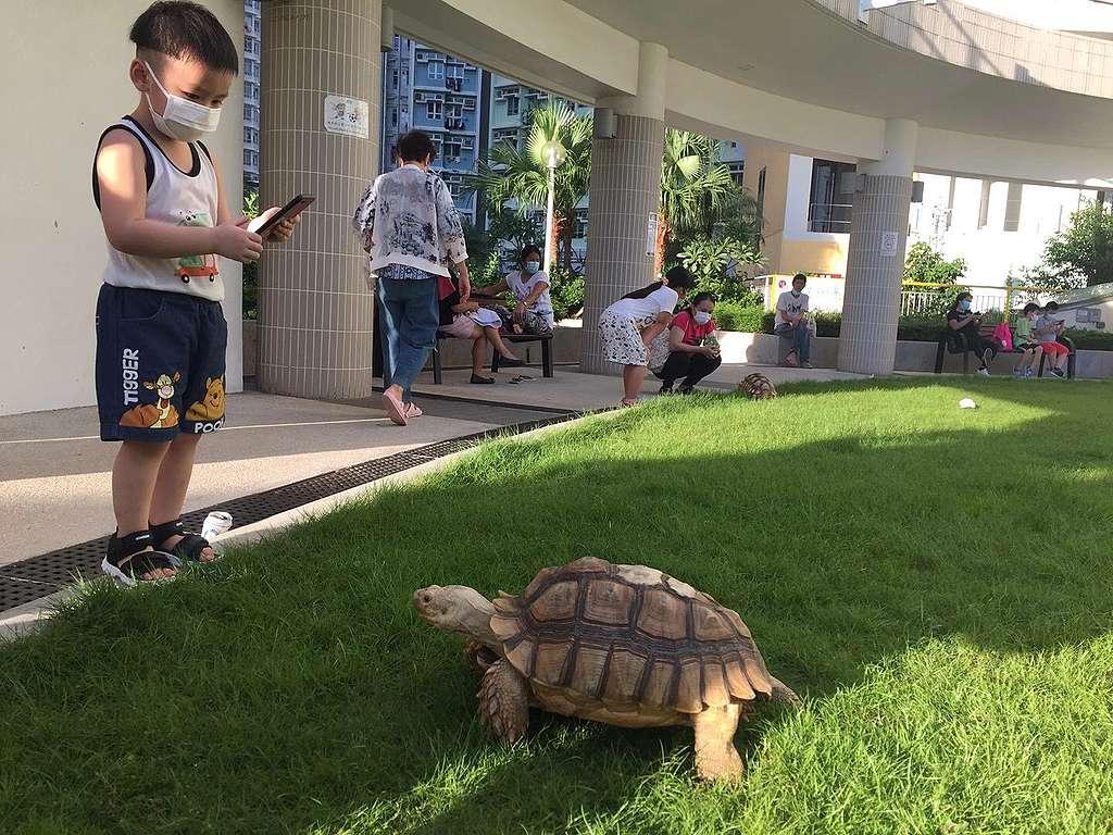 有人要送類似這隻的陸龜給我© Island hopper