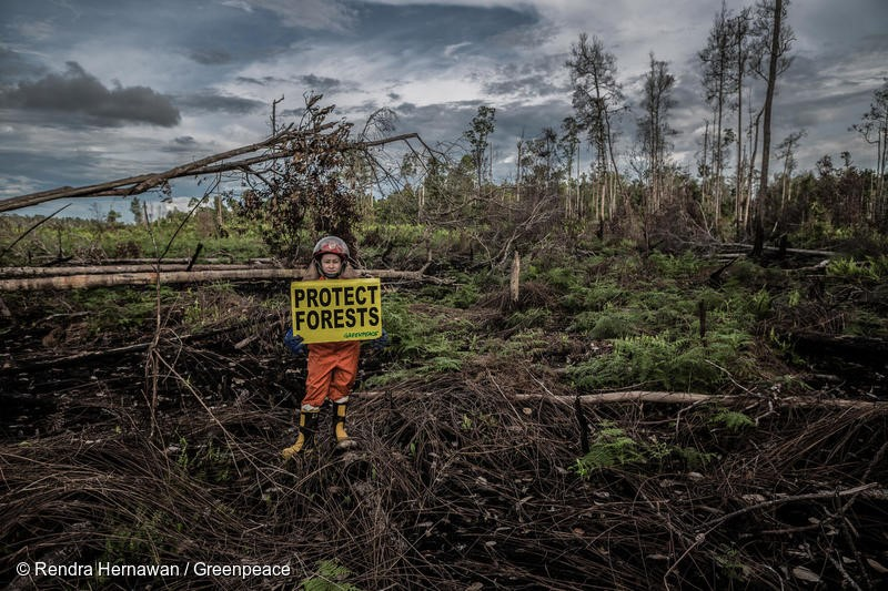"""Greenpeace Indonesia Forest Fire Prevention team Jane Yolanda holds a banner reads """"Protect Forest"""" at a fire scar in the peatland, Tanjung Pura village, Ketapang, West Kalimantan."""