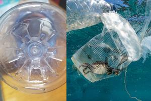 例如這個膠樽的底部(左圖),註明了它屬於1號塑膠,不好好處理或回收就將會成為海洋生物的「牢籠」(右圖)。© Greenpeace