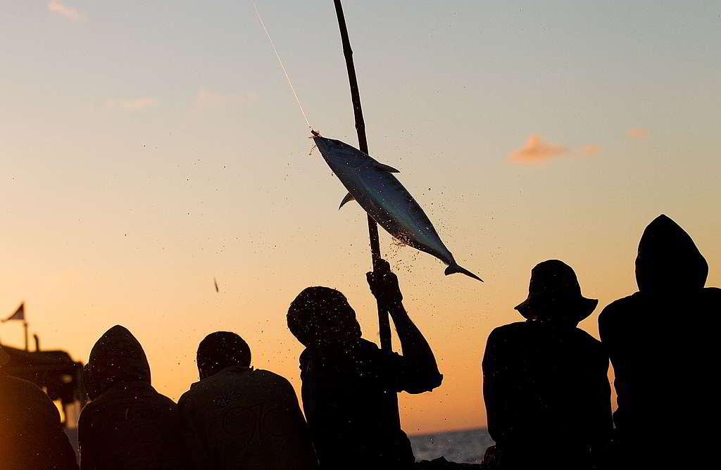 印尼弗洛雷斯的漁民,用竿釣捕魚釣吞拿魚。用釣竿和釣線捕魚,對海洋長遠的可持續性和發展有利。© Paul Hilton / Greenpeace