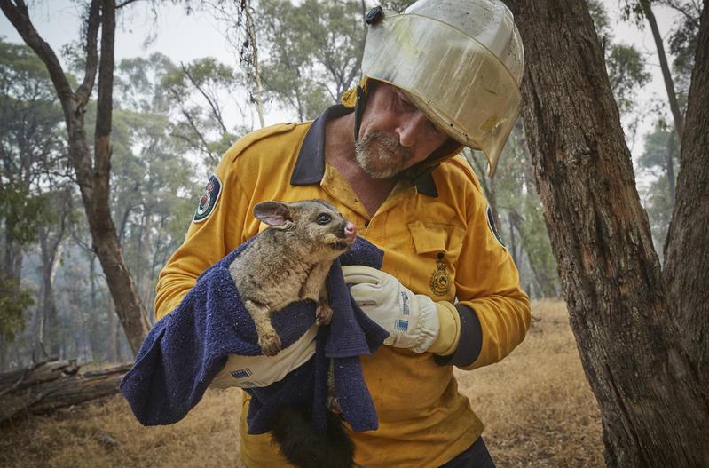1月中志願消防員在澳洲Snowy Mountains拯救山火中受困受傷的動物。© Kiran Ridley / Greenpeace