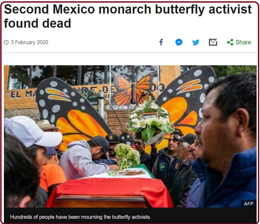 BBC 新聞截圖:第二位帝王斑蝶前綫守護者發現身亡(圖出自AFP)