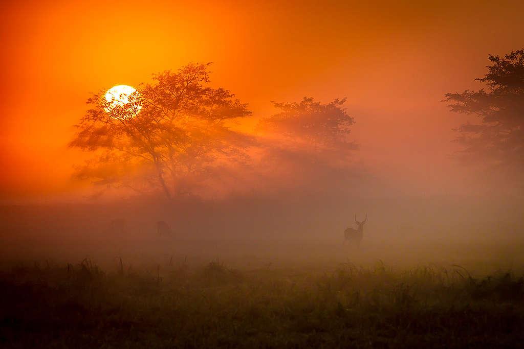 熱愛野生環境和各種動植物,Morgan轉居南非。© Morgan Trimble