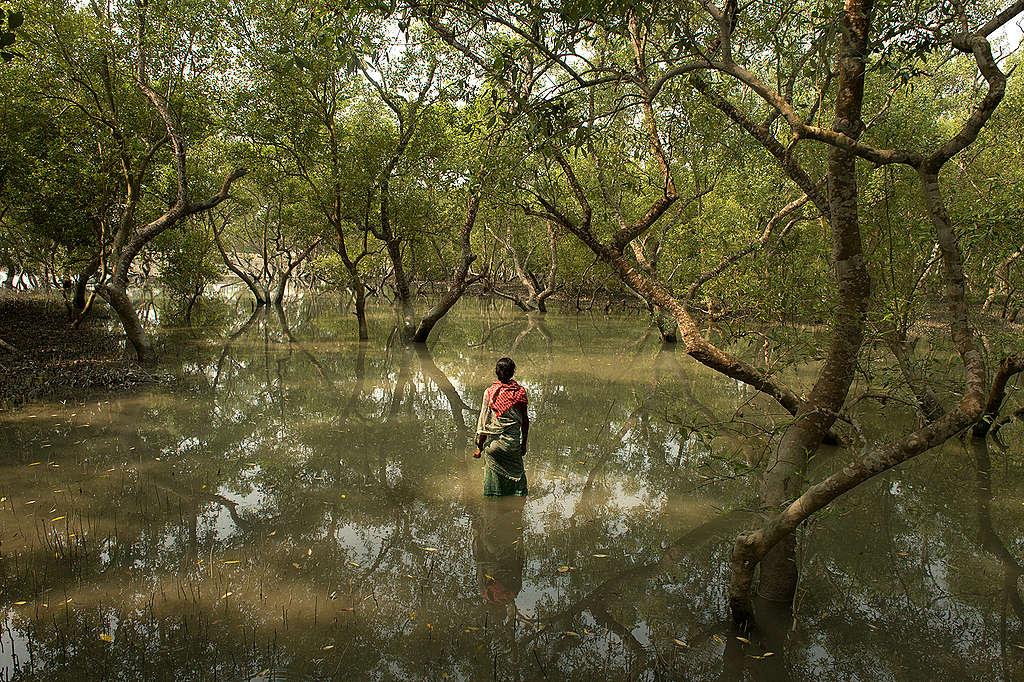 河流孕育無數的生物。© Arati Kumar-Rao