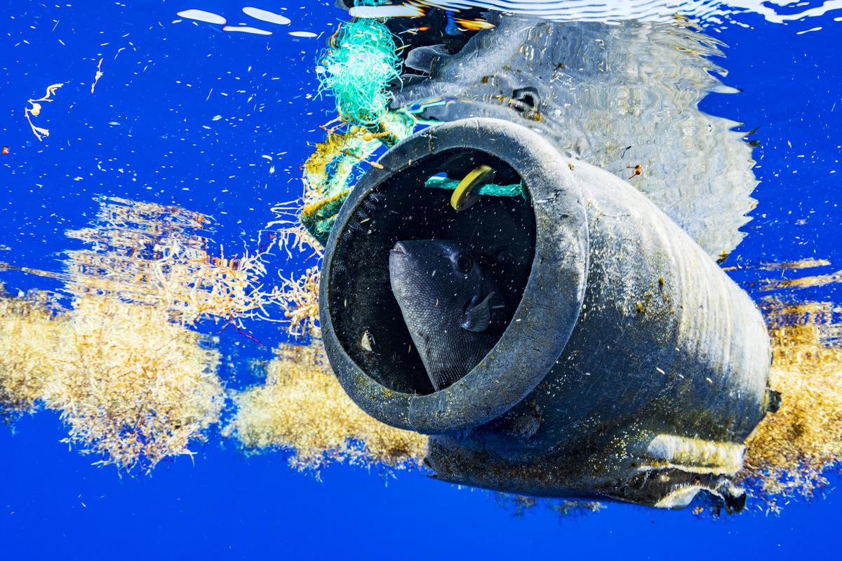 海洋中的塑膠垃圾已嚴重侵擾生態健康。 © Shane Gross / Greenpeace
