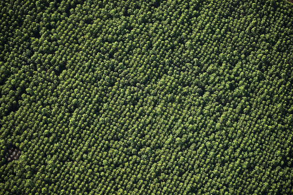 巴西帕拉州(Pará State)種植園「倒模」般的綠,掩蓋不了脆弱儲碳能力與貧瘠生物多樣性。 © Daniel Beltrá / Greenpeace