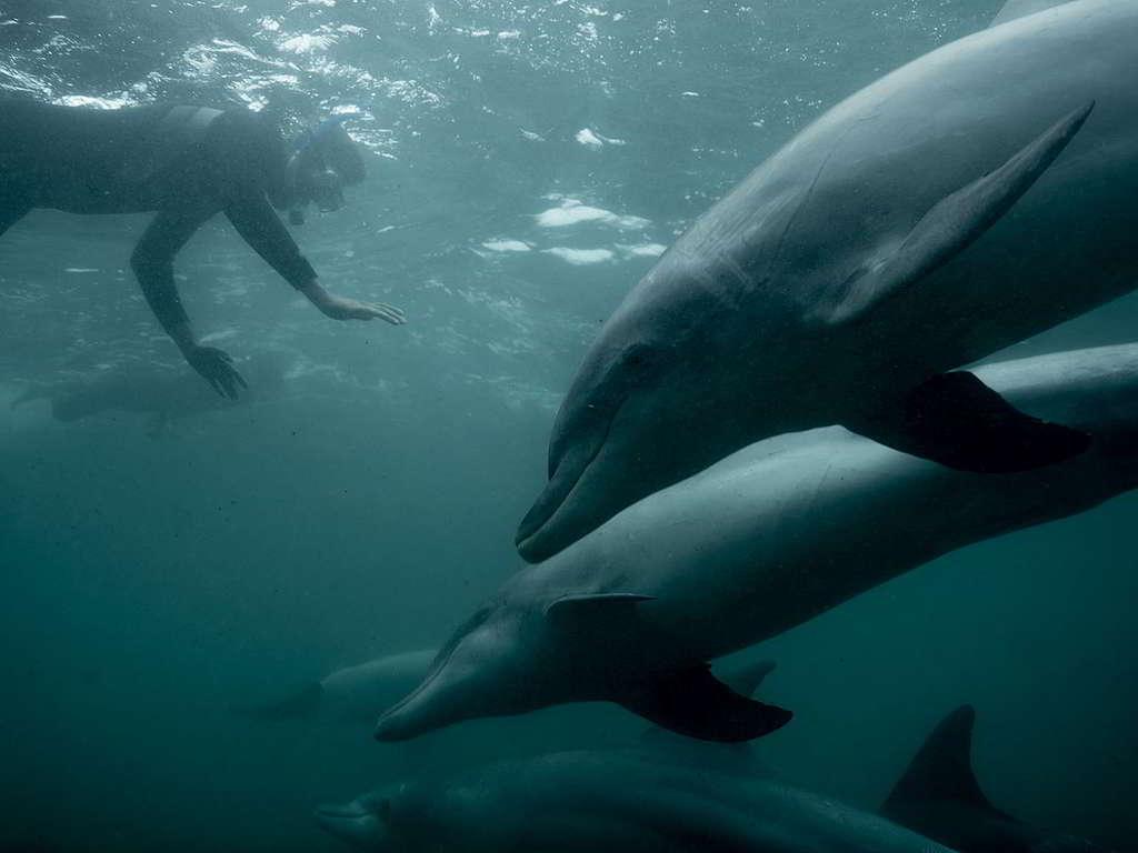 綠色和平船艦彩虹勇士號2018年巡航大澳洲灣,與海豚碰個正着。 © Michaela Skovranova / Greenpeace