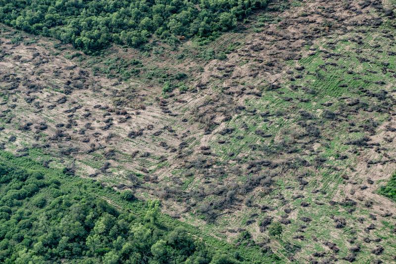 Gran Chaco平原是南美第二大森林,僅次於亞馬遜。過去30年,阿根廷因畜牧業和農業工業化,損失800萬公頃森林。© Martin Katz / Greenpeace