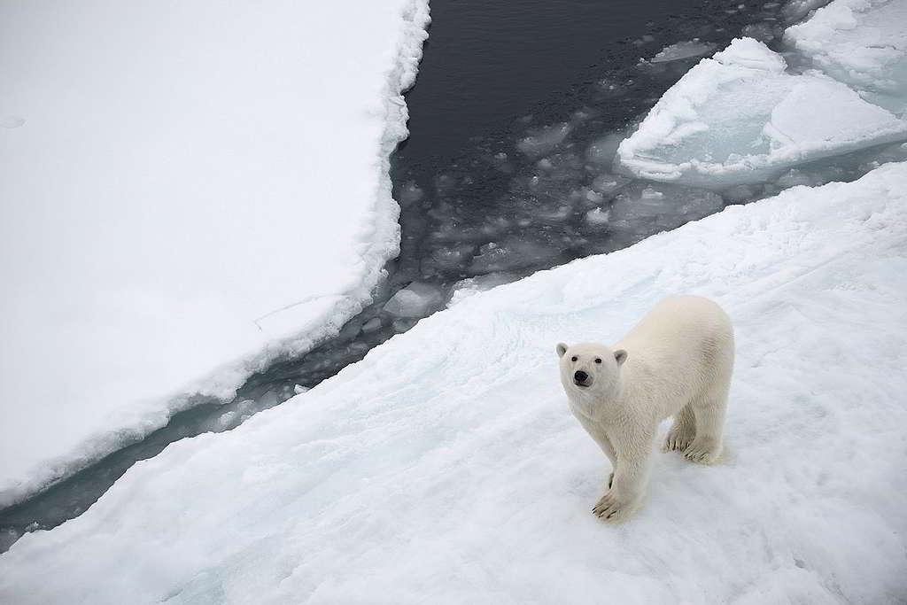 守護北極熊僅餘的立冰之地,也是守護您我共享的地球家園。 © Daniel Beltrá / Greenpeace