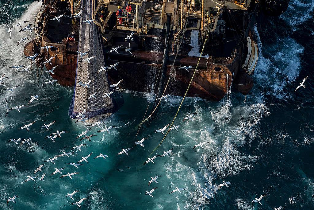 英吉利海峽的工業捕撈。 © Christian Åslund / Greenpeace
