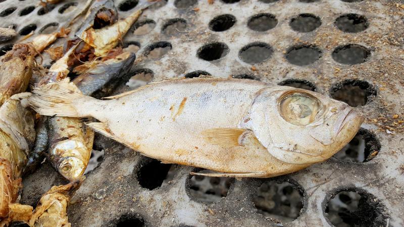 魚類肉品本來是當地人攝取蛋白質的重要來源,不受規管的遠洋漁船來到,卻起了翻天覆地的變化。© Greenpeace / Pape Diatta Sarr