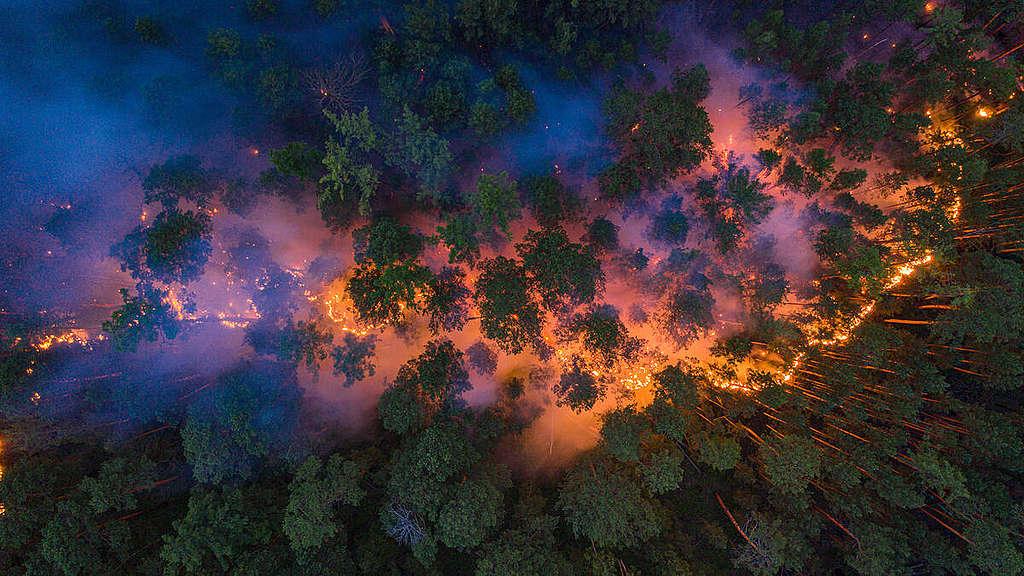 2020年俄羅斯的嚴重野火,超過1,100萬公頃針葉林陷入火海,西伯利亞東部為主要受影響地區。© Julia Petrenko / Greenpeace