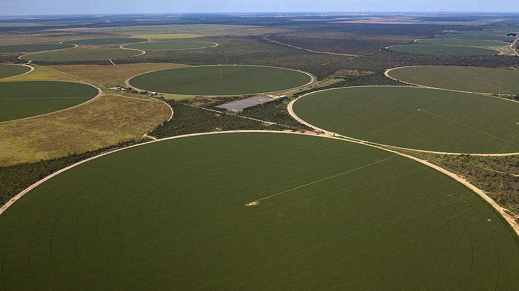 塞拉多大豆種植園的中央灌溉系統,固然有助刺激產量,卻嚴重損耗當地珍貴水資源。 © Marizilda Cruppe / Greenpeace