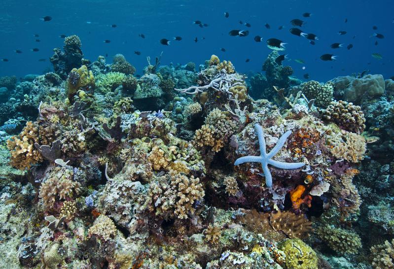 珊瑚礁孕育了種類豐富的海洋生物。 © Paul Hilton / Greenpeace
