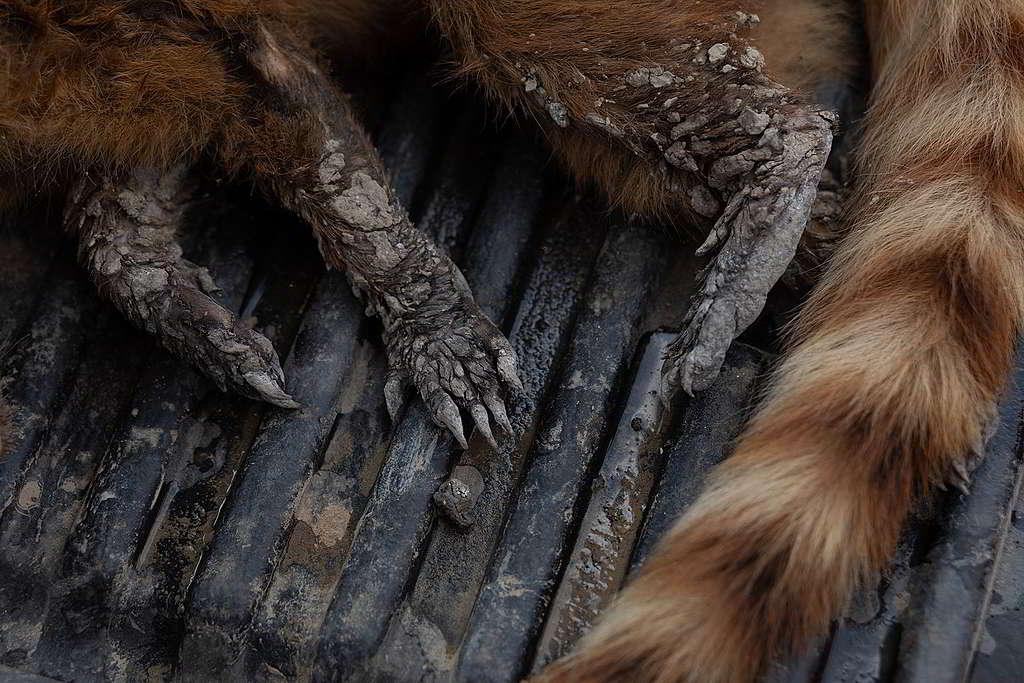有野生動物走避不及葬身大火,四肢均被燒焦。 © Iberê Périssé / Projeto Solos