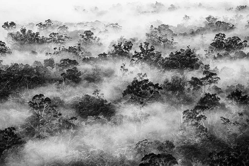 印尼巴布亞擁有豐盛的文化和生態多元性;圖為南巴布亞迪古爾河的原始森林上的霧景。 © Ulet Ifansasti / Greenpeace