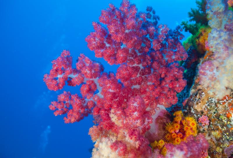 台灣綠島的紅珊瑚,色彩燦然。©PaulHilton / Greenpeace
