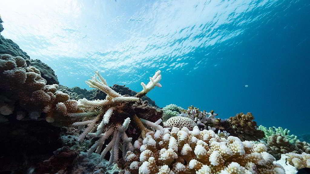綠色和平今年8月記錄台南墾丁3個潛水地點的珊瑚白化現象,其中海洋溫度最高可達31°C。© Lion Yang / Greenpeace