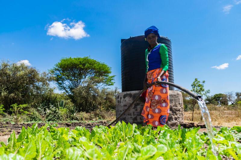 肯尼雅的生態農民,使用太陽能水泵給種植的菠菜澆水。© Greenpeace / Paul Basweti
