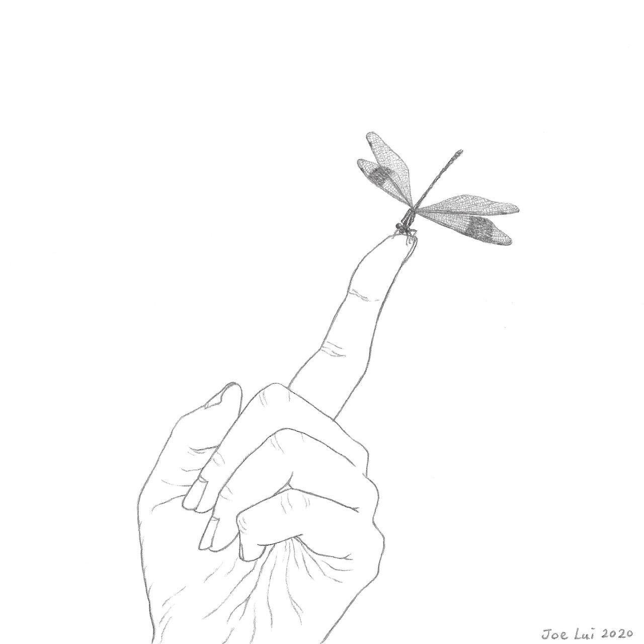 【手上留情】方帶幽蟌 ©呂朗