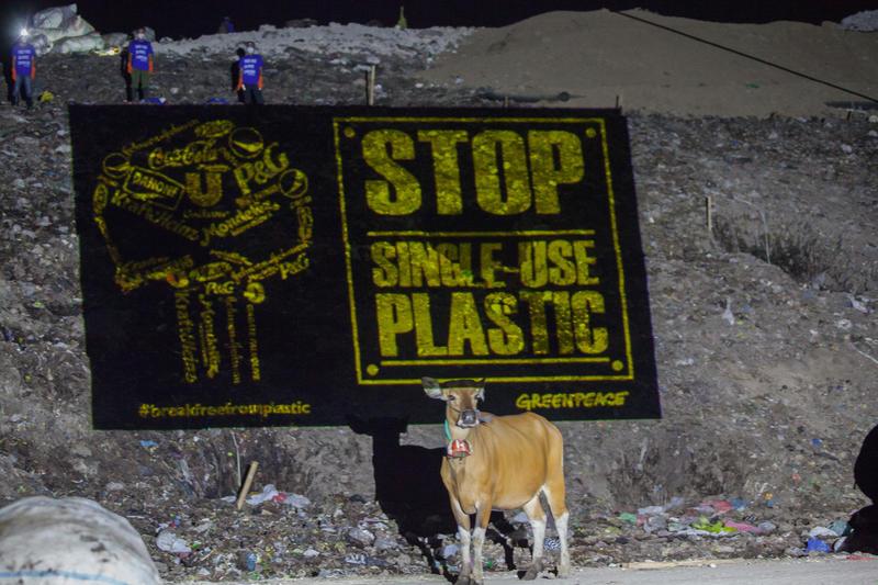 綠色和平在巴厘島呼籲停用即棄塑膠,一隻牛經過橫額 © 綠色和平