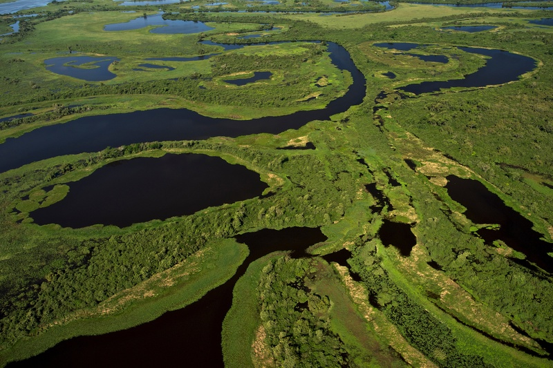 巴西的潘塔納爾濕地(Pantanal),是全球最大的熱帶濕地。© Markus Mauthe / Greenpeace