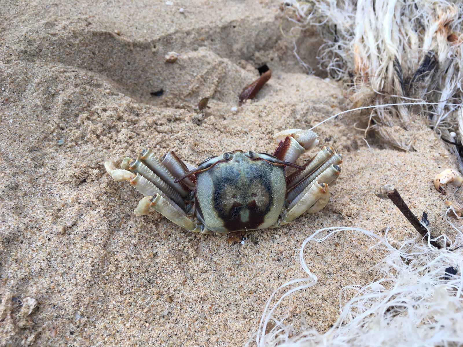 小編在2021年1月24日在南丫島淨灘時發現一隻被廢棄漁網纏繞的蟹,這一隻蟹或因無法解脫,而活活被餓死。© 綠色和平