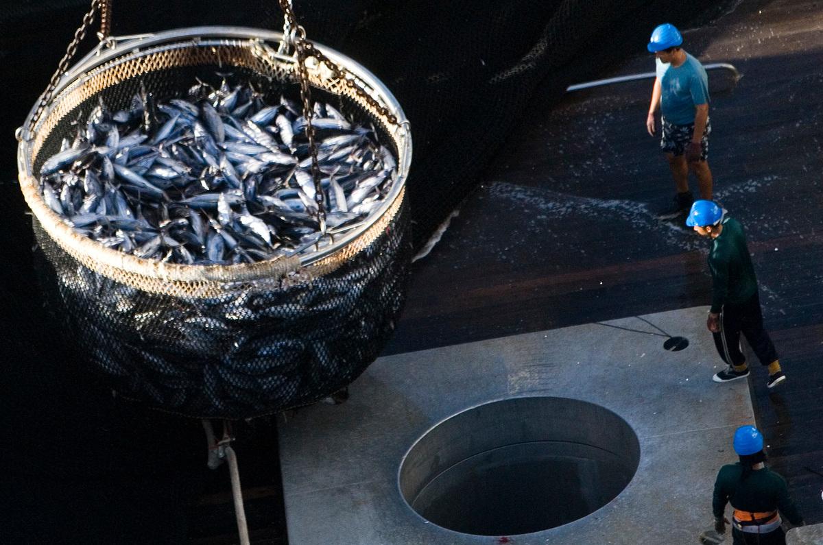 現代工業捕魚直接危害全球的生物多樣性,遠洋漁業還經常出現漁工權利遭受剝削的問題。© Paul Hilton / Greenpeace